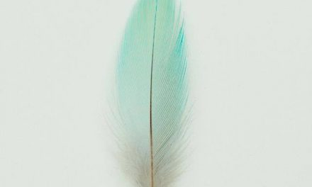 Le Poisson Volant N°31