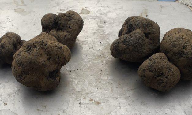 Les truffes de Magali Boisse